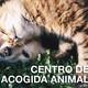 TorreLoMola - Programa en el Centro de acogida Animal