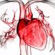 BioBalears 78 - ¿Por qué el corazón está en el lado izquierdo?