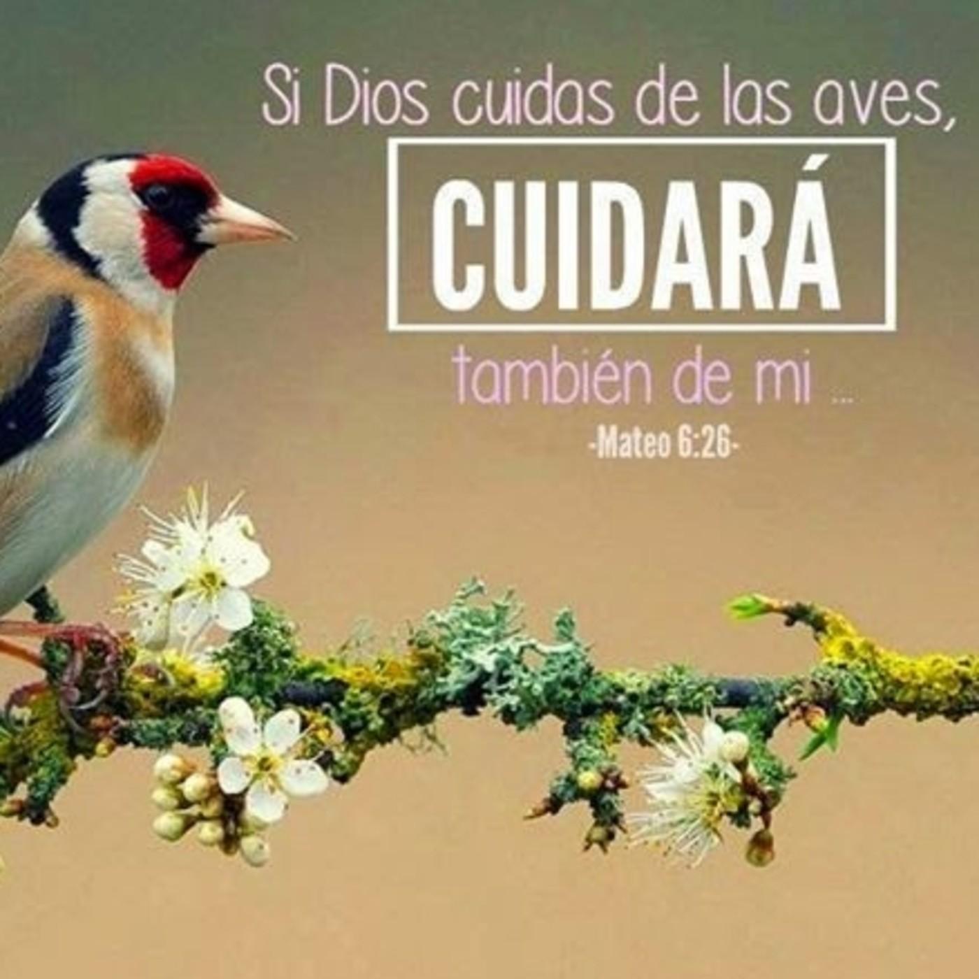 Si El Cuida De Las Aves En I M Radio On Line En Mp3 14 12 A Las 06