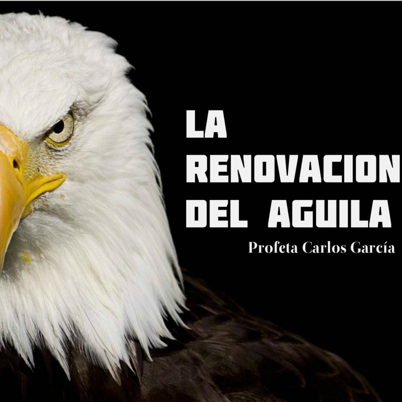 La Renovación del Aguila - Predicaciones Profeticas en