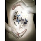 Colección de Mariposas...Música para sentir