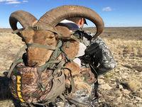 DIY Elk in Oregon with Shannon Mobbs 9.33