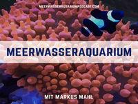 #0097 Zwergkaiser gefährlich für Korallen?