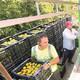 La baixa producció citrícola porta a mínims els contractes en el camp