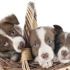 Por el bien de los animales , dejemos de humanizarlos