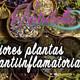 Nutribella - LAS MEJORES PLANTAS ANTIINFLAMATORIAS