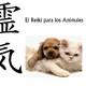 Entrevista sobre la terapia Reiki en los Animales