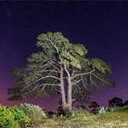 En la línea de lo imposible: El árbol maldito de Casandra
