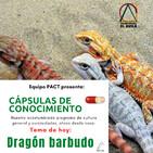 Temporada 2 EP 14 Dragon Barbudo con Rodrigo