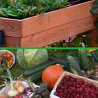 Cultivar un huerto en casa