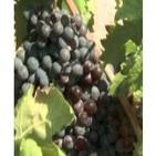 El vino y el clima: una relación amenazada