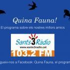 Quina Fauna! Snouts, Lucy del Vacchio, 08-11-15