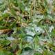 HF La importancia de las horas de frío en el cultivo de frutales.