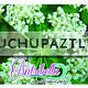 Nutribella - CHUCHUPAZTLE