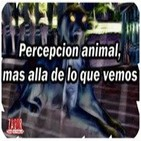 36º-Percepción animal, mas allá de lo que vemos (Voz Humana)