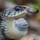 La Luciérnaga 06-06-18. Serpientes: mitos y realidades
