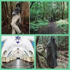 El metro de Moscú, El Bosque de los suicidios, La Molécula de Dios, y el edificio Windsor...