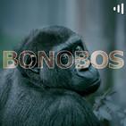 Bonobos: Recordando a Leonard Cohen