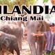 Podcast 15. Viviendo por el Mundo en Tailandia 2. Chiang Mai