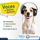 Rescate y adopción animal