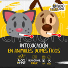 T02E08. Intoxicación en animales domésticos