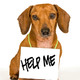 ¿Qué hacer si vemos un perro abandonado?