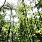 La Brújula de la Ciencia s09e40: Los bosques del Pérmico, entre los helechos y las coníferas