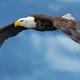 El Águila que olvidÓ su esencia parte 1