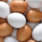La báscula - Mitos del huevo