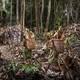 251. Trabajo en el Paleolítico: la jornada laboral del cazador-recolector (entrenamiento paleo IV)