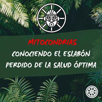 Mitocondrias - Conociendo el eslabón perdido de la salud óptima