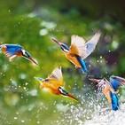 Relaxing Birds, Nature y Piano 30 minutos
