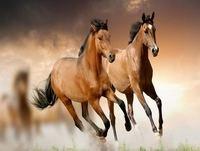 La Voz de la Noche - Meditación del Animal: Caballo - 2 Mayo 2015