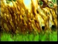Documentales BBC ~ El Clima - El Calor