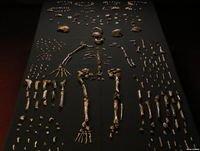 Evolución Humana II. Homo Naledi y paleoantropología con el Dr. Daniel Turbón U.B. Prog 111. LFDLC