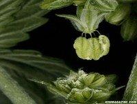 PlantaMadre 14: Polinización