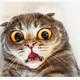 #Portafolio 120, el de los gatos