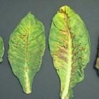 Fascinacion por las plantas - 174 - Virus vegetales y4