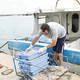 La pesca de Castelló pateix minvament de captures per la superpoblació de tonyina