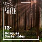 #13 Elena Álvarez - Bosques sostenibles, incendios forestales y cambio climático