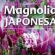 El Angel de tu Salud - MAGNOLIA JAPONESA