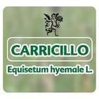 El Ángel de tu Salud - CARRICILLO**