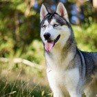 ANI-MANÍA (datos curiosossobre nuestros caninos)
