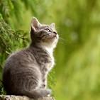 BRAVO POR LA MÚSICA: Más canciones felinas