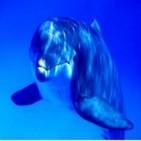 Sonido de ballenas y delfines
