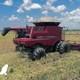 Agricultores consolareños potencian el cultivo del arroz