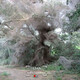creepypasta - bosque de arañas