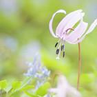 Concierto de primavera, 130419