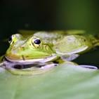 Programa a Ninguna Parte PANP #3 [Fragmento]: Fábula de Esopo: las ranas pidiendo rey
