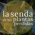 Los árboles de agua y luna: Salix spp. {La Senda de las Plantas Perdidas}